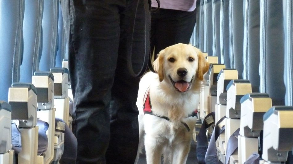 Step by step instruction on travelling with a service dog